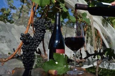 Produtores de uva e vinho têm até maio para se cadastrarem no novo Sivibe