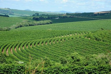 Relatório estima redução de 40,7% da safra de café em 2021 em Minas