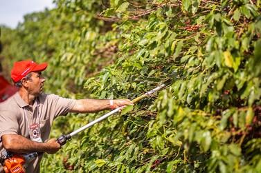 Tempo seco pode antecipar a colheita da próxima safra de café