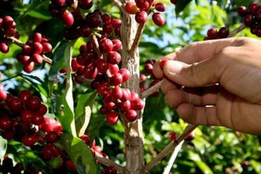Andradas terá palestra online sobre os cuidados na pós-colheita do café