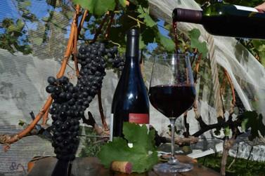 Epamig apresenta mercado de vinhos mineiros a empresários internacionais