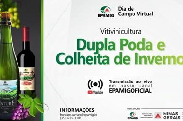 Epamig realiza Dia de Campo virtual sobre dupla poda e vinhos de inverno