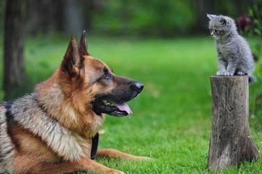 Acontece em Atibaia o Programa Permanente de Castração de Cães e Gatos