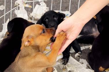 Feira de Adoção de Animais acontece neste sábado no Alvinópolis