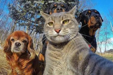 Feira de Adoção de Animais acontece neste sábado em Atibaia
