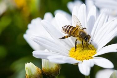 Evento gratuito terá bate papo sobre a importância das abelhas em Atibaia