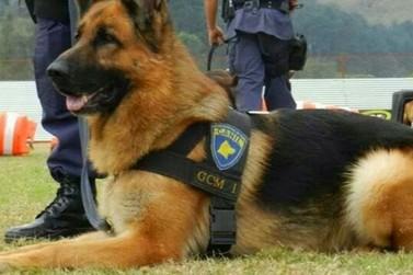 Inauguração do Canil Municipal: GGI Atibaia contará com cães treinados