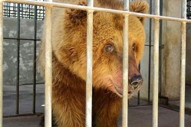 Ursa Marsha será transferida para Santuário em Joanópolis