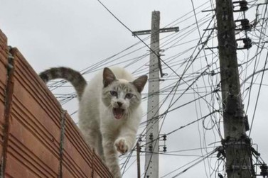 Elektro combate Gatos e identifica mais de 100 furtos de energia em Atibaia