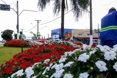 Atibaia Florida: mais de 50 mil mudas embelezam a cidade