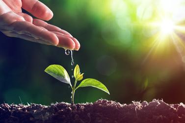 Atividades e ações para problemas ambientais marcam a Semana do Meio Ambiente