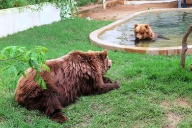 Decisão judicial manda transferir ursos Dimas e Kátia para Joanópolis