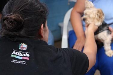Programa Permanente de Castração de Atibaia atendeu mais de 1.400 animais