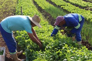 Horta Municipal garante alimentos para instituições sociais de Atibaia