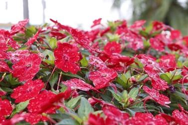 Ampliação do Programa Atibaia Florida reforça o município como Cidade das Flores