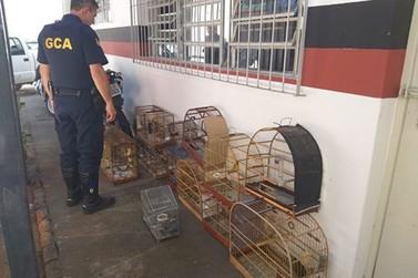 Mais de 80 aves silvestres são recolhidas em Bragança Paulista