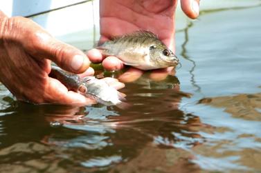 Casa de Passagem de Atibaia recebe doação de peixes