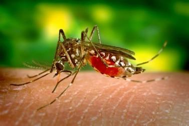 Com a chegada do verão é preciso redobrar os cuidados em relação à Febre Amarela