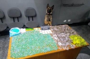 Com ajuda de cão farejador, Guarda Civil apreende drogas enterradas em Atibaia