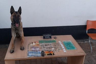 Operação do GGI apreende drogas e três indivíduos por tráfico
