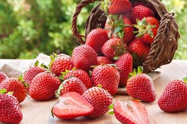 Produção de morango em Atibaia é prejudicada pelo clima