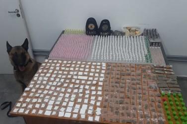 Com ajuda de cão farejador, Guarda Civil apreende grande quantidade de drogas