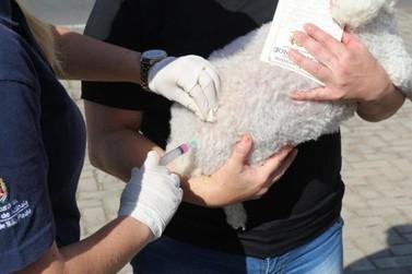 Mais de 17 mil animais foram imunizados gratuitamente contra a Raiva em Atibaia
