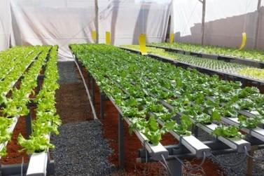 Produtores rurais de Atibaia investem em alimentos hidropônicos