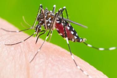 Anvisa altera indicações para uso de vacina contra Dengue