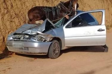 Quatro pessoas ficam feridas em acidente grave envolvendo cavalo, em Canelinha
