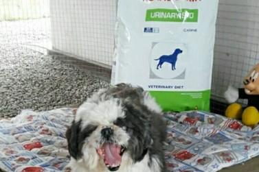 Acapra promove mais uma edição da Feirinha de Adoção de Cães e Gatos