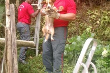 Cachorro é resgatado pelo Corpo de Bombeiros de Brusque