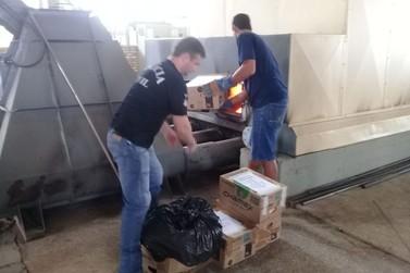 Entorpecentes apreendidos em Brusque e Guabiruba são incinerados