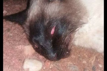 Moradoras do bairro Santa Rita se unem contra envenenamento de animais na região
