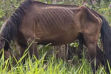 Cavalo abandonado em mata do Poço Fundo morre degolado em acidente