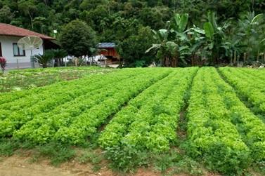 Produção rural ajuda a movimentar a economia de Brusque