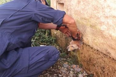 Bombeiros salvam cachorro que ficou com a cabeça presa em buraco de muro