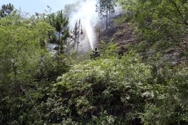 Bombeiros extinguem incêndio em vegetação às margens da Antônio Heill