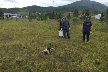 Tamanduá mirim é resgatado de garagem de casa do bairro Bateas