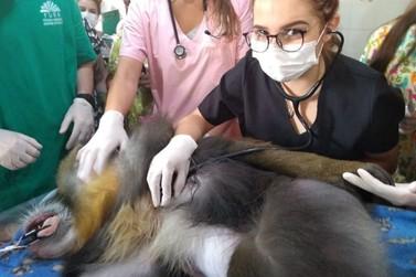 Zoo realiza check-ups nos animais
