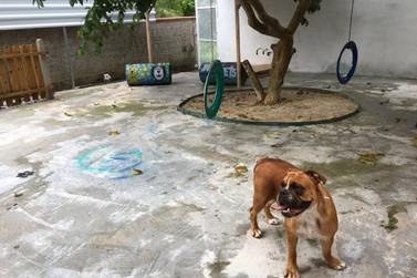 Hotel e creche para pets inaugura com espaços recreativos para cães e gatos