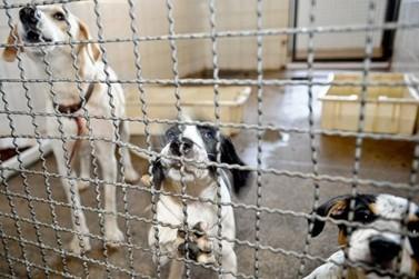 Senado pode votar na quarta pena de prisão para quem maltratar animais