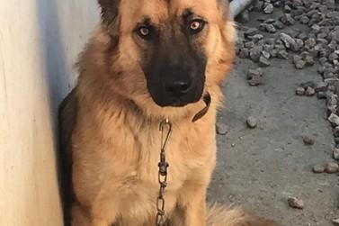 Homem é preso por maus tratos contra animais, no Limoeiro
