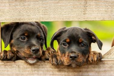 Pata Guabiruba realiza cachorro-quente solidário em prol da entidade