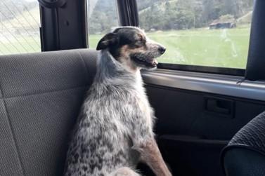 Tutora procura cachorrinha que fugiu em Brusque nesta sexta-feira (22)