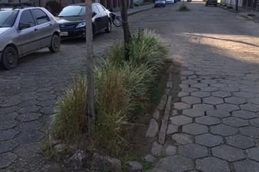 Vereador pede mão única, pavimentação e retirada de canteiros na Rua Alois Moritz