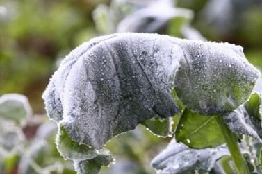 Fake news: PR e o país não terão o inverno mais frio em 100 anos