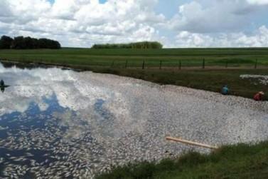 Falta de energia provoca morte de 40 toneladas de peixes na região de Toledo