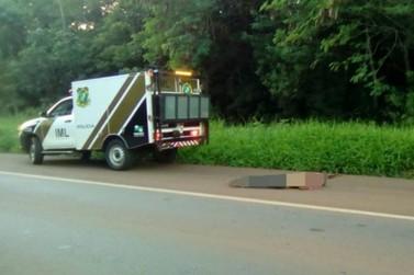 Homem e três cachorros morrem atropelados em rodovia da região de Campo Mourão