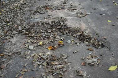 Moradores reclamam da situação do Parque Municipal de Cruzeiro do Oeste